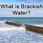 All about Brackish Water Image