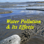 Water Pollution Effects Image