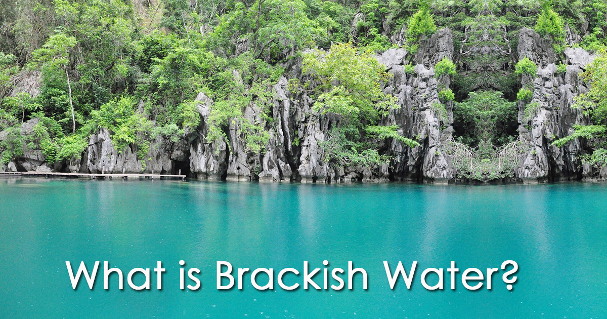 What is Brackish Water image