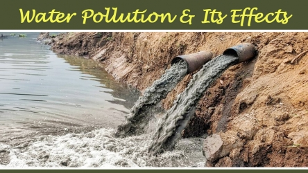 Water Pollution Effects | Types, Causes & Solutions
