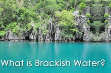 All about Brackish Water – Plants | How to make it?